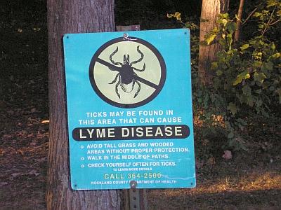 Lyme? Zorg voor weerstand
