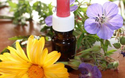 Werkzaamheid Echinacea (homepathisch middel)